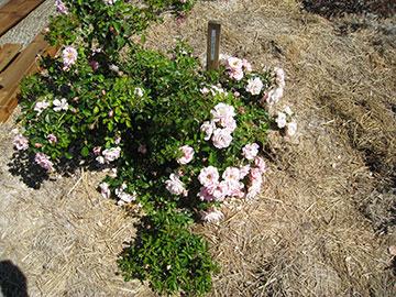 Terra Bella Vista Garden July 2008